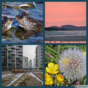 billede med 4 billeder